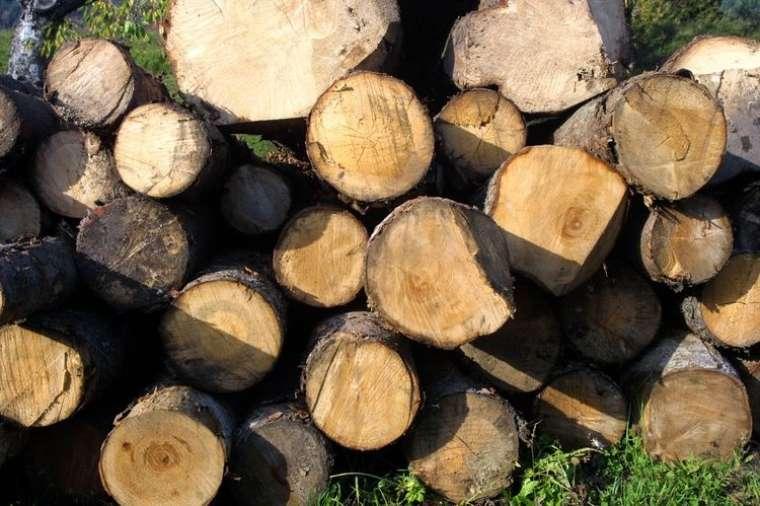 debla-drevesa-les_bobo