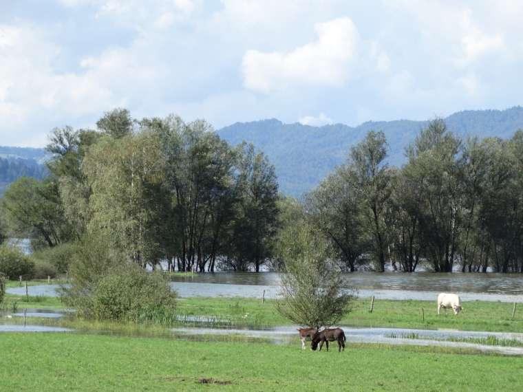 poplave, ljubljanica, ljubljansko barje