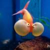 ribebibe