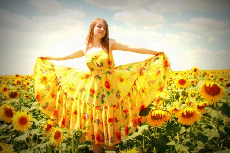 sunflower-834992