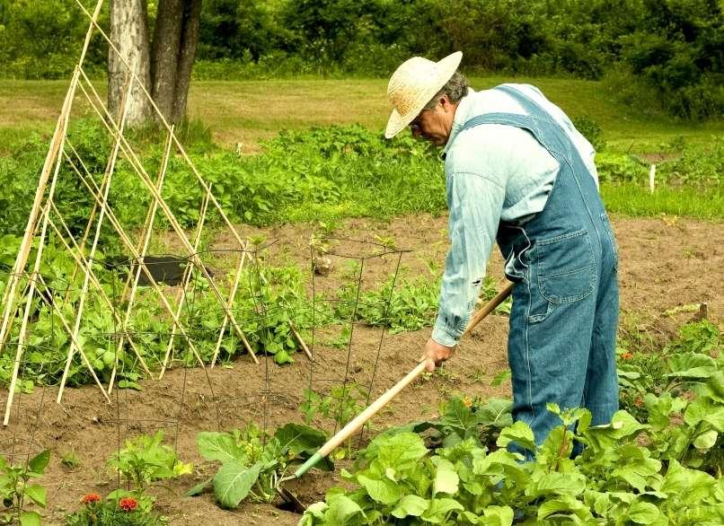 plevel, vrt, kmetovanje, kmet,