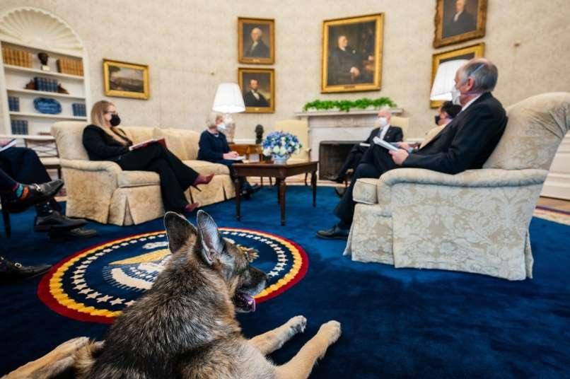 Joe Biden, Champ,
